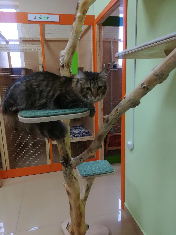 Боня в гостинице для кошек Мяу House, Темиртау
