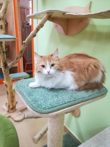 Лиси в гостинице для кошек Мяу House, Темиртау
