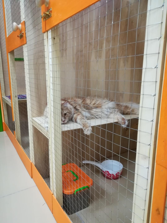 Мэйсон в номере Люкс в гостинице для кошек Мяу House, Темиртау