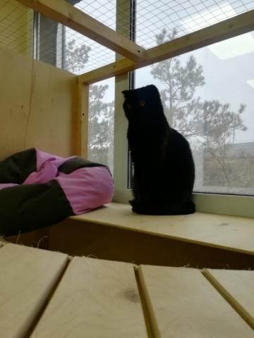 Мэсси в гостинице для кошек Мяу House, Темиртау