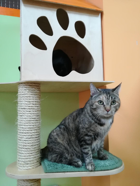 Надя в гостинице для кошек Мяу House, Темиртау