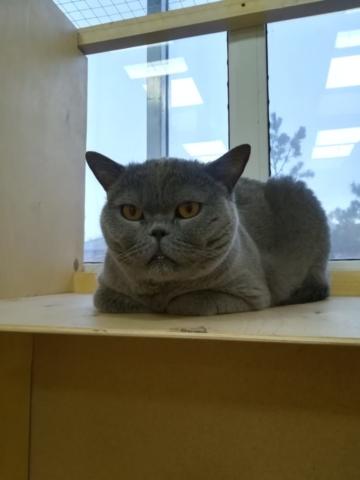 Том, номер Люкс+ в гостинице для кошек Мяу House, Темиртау