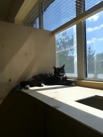 Раск в гостинице для кошек Мяу House, Темиртау