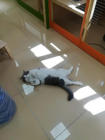 Тобик в гостинице для кошек Мяу House, Темиртау