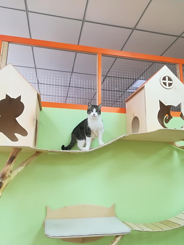 Рикки в гостинице для кошек Мяу House, Темиртау