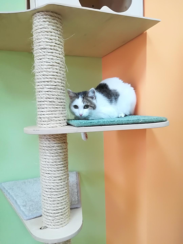 Молли в гостинице для кошек Мяу House, Темиртау