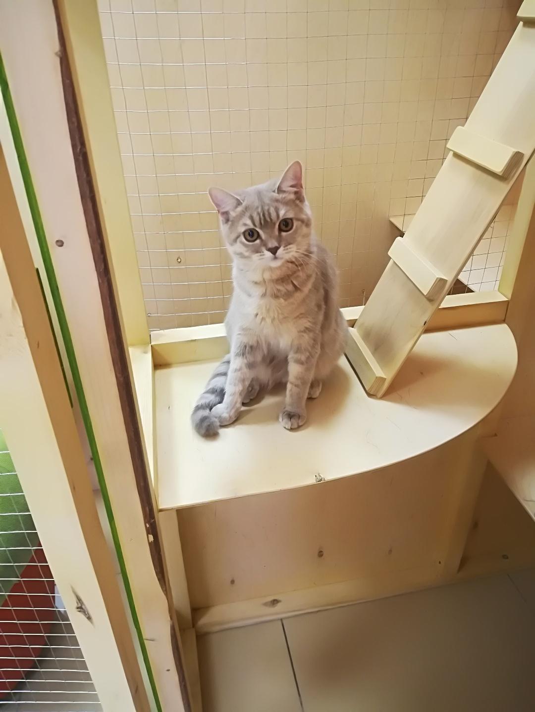 Мэри в гостинице для кошек Мяу House, Темиртау