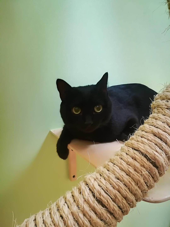 Шнурок в гостинице для кошек Мяу House, Темиртау