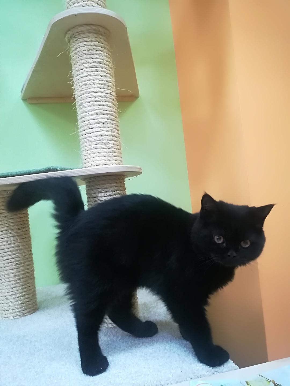 Потап в гостинице для кошек Мяу House, Темиртау
