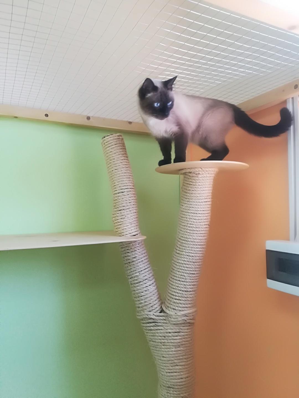 Муркин в гостинице для кошек Мяу House, Темиртау