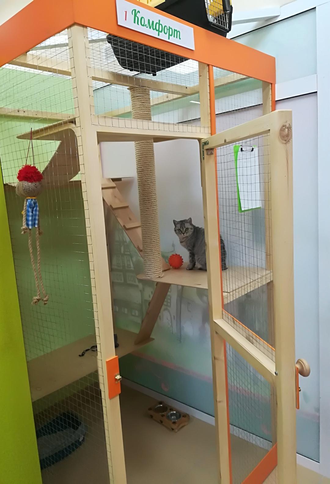 Линси в гостинице для кошек Мяу House, Темиртау
