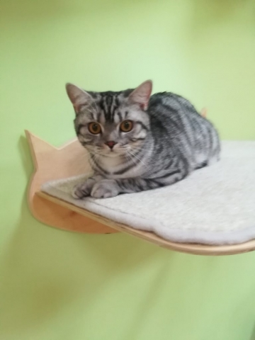 Оскар в гостинице для кошек Мяу House, Темиртау