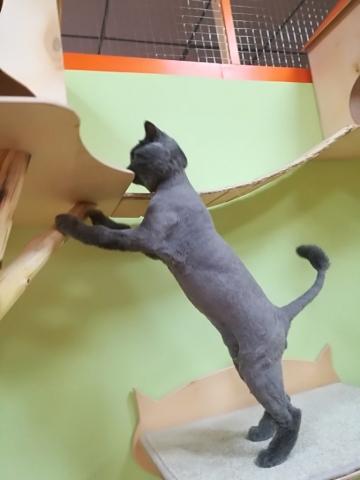 Чарли в гостинице для кошек Мяу House, Темиртау