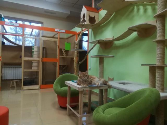 Мэйсон в гостинице для кошек Мяу House, Темиртау
