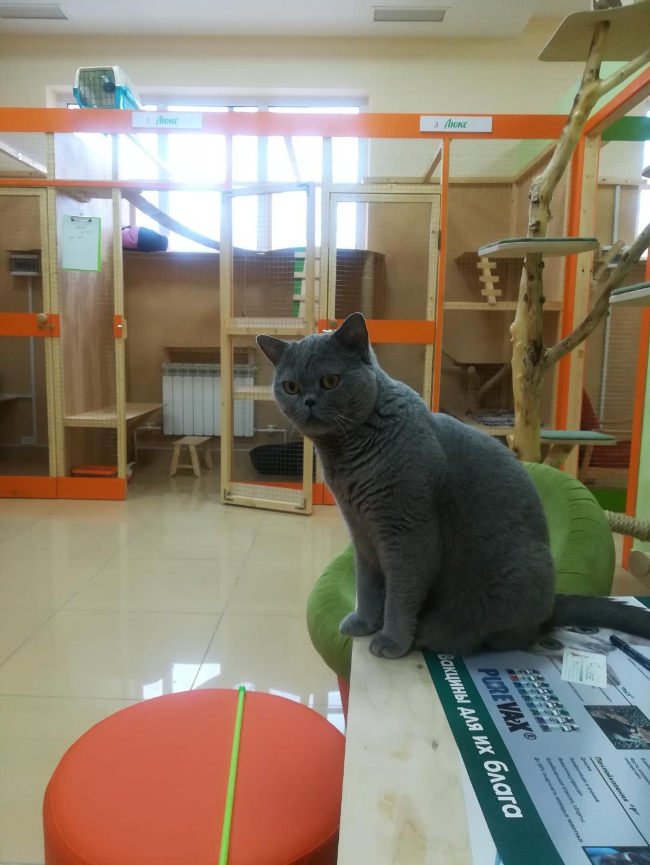 Том в гостинице для кошек Мяу House, Темиртау