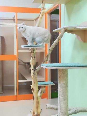 Тим в гостинице для кошек Мяу House, Темиртау