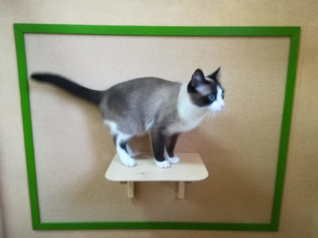 Мисти в гостинице для кошек Мяу House, Темиртау